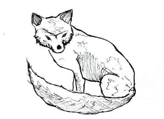 Revista 2 - El conejo de monte: un futuro incierto - Trébago
