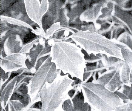 Revista 3 fauna y flora de los campos de tr bago los for Como se llaman los arboles que no pierden sus hojas